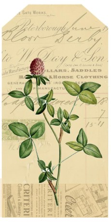 red_clover_vintage1tag