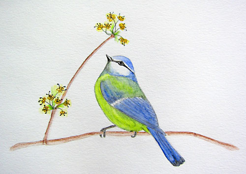 chickadee in Spring watercolor pencils
