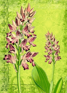 Vintage Botanical ATC High-Resolution image