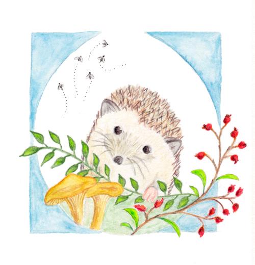 201410_hedgehog_small