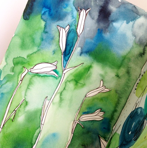 lily seed pods - line drawing and watercolor (added after the drawing was done)